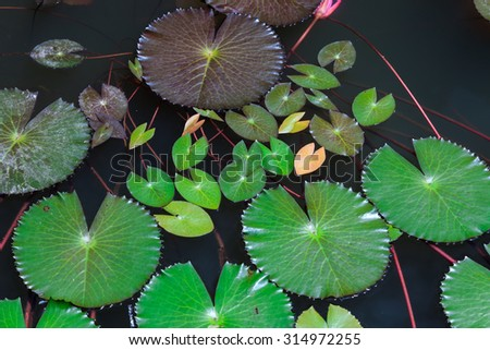 Pink lotus on natural background - stock photo