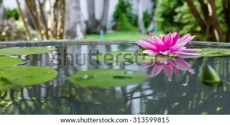 Pink lotus or water lily in pond - stock photo