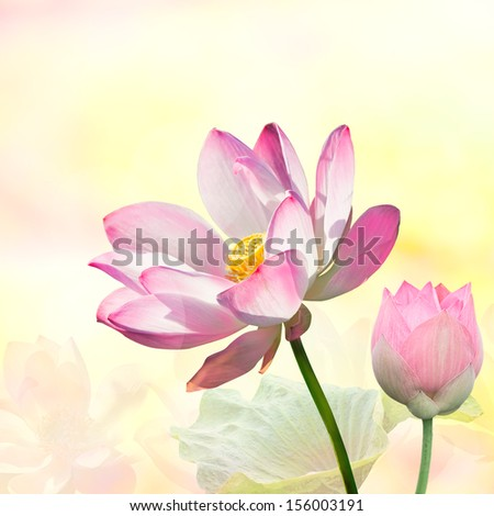 Pink lotus with light blue background - stock photo