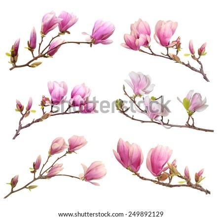 magnolia branch clip art-#19