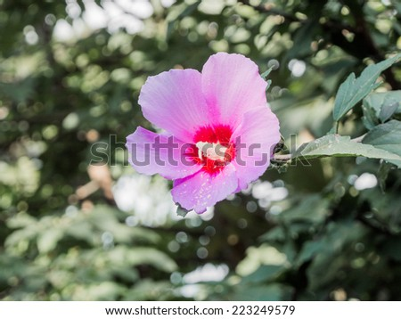 Pink meadow flower - stock photo
