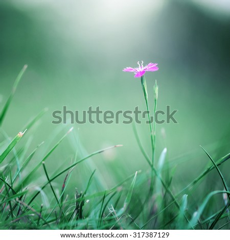 pink meadow wild flower on green grass natural background in field. Outdoor autumn photo - stock photo