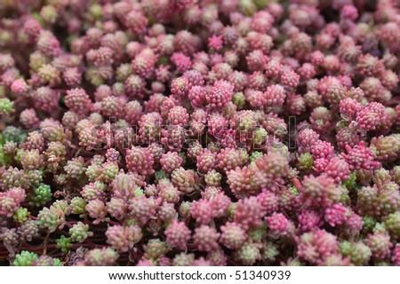 Pink moss background - stock photo