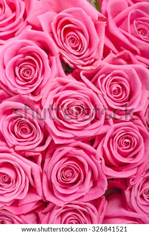 Pink natural roses background pattern - stock photo