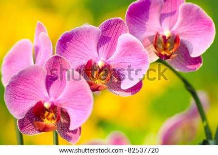 Pink orchid against of tropical flowers