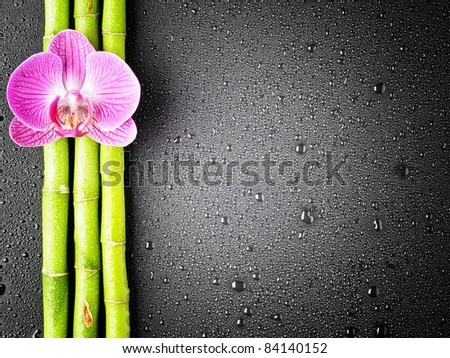 Pink orchid and bamboo grove on the black background - stock photo