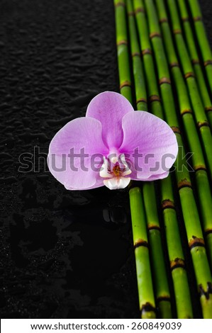 Pink orchid and bamboo grove on wet  - stock photo