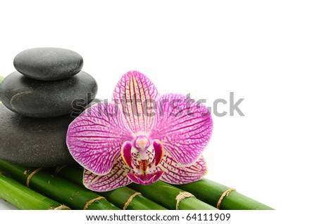 Pink orchid and stones on the bamboo grove - stock photo