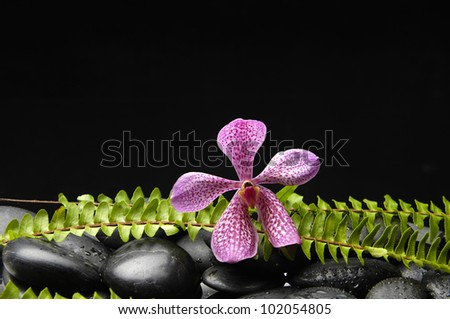 Pink orchid and stones with green fern �black background - stock photo
