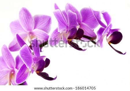 Pink Orchid branch (macro photo)  - stock photo