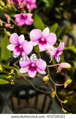Pink orchid flower at flower's market. - stock photo