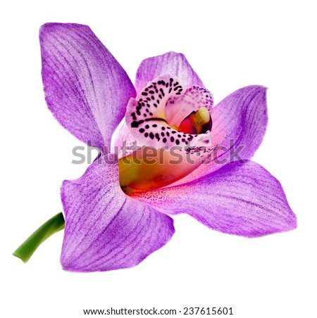 Pink Orchid flower head close up isolated on white background - stock photo