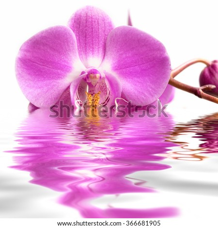 Pink orchid flower on water.  - stock photo