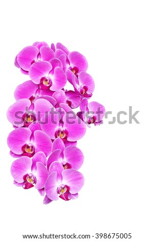 Pink orchid flower (phalaenopsis) isolated on white background thailand love valentine
