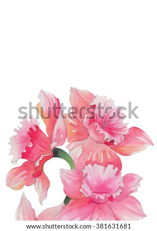 pink orchid flowers bouquet watercolor spring summer for you design decor on cover book ,wedding card design , frame.artwork Isolated on white background illustration