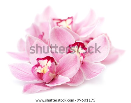 pink orchid flowers isolated - stock photo
