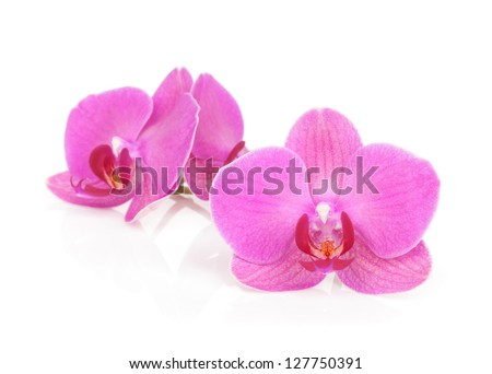 Pink orchid flowers. Isolated on white background - stock photo