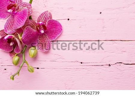 Pink orchid flowers on a wooden background. Orchid background. - stock photo