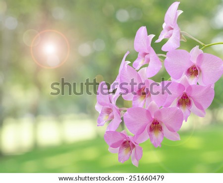 Pink orchid flowers on de focused background