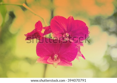 Pink orchid in pastel tone - stock photo