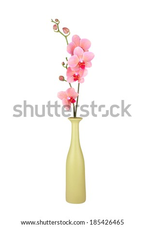 Pink Orchid In Vase Isolated On A White Background - stock photo