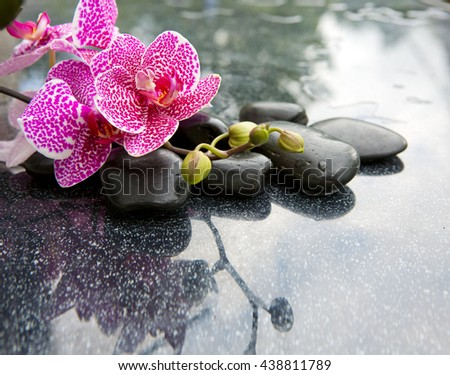 Pink orchid isolated on black background.