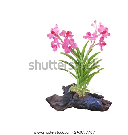 pink orchid on a piece of wood - stock photo