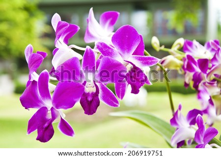 Pink orchid on branch background