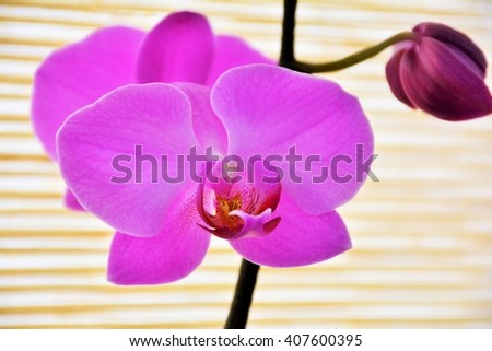 Pink orchid on straw background - stock photo