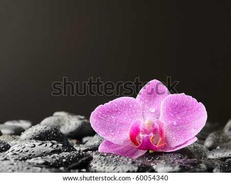 Pink orchid on the black zen stones - stock photo