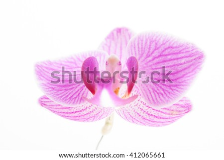 Pink orchid on white background. Image of love and beauty. Natural background and design element. - stock photo