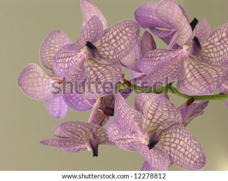 Pink orchid spray - stock photo