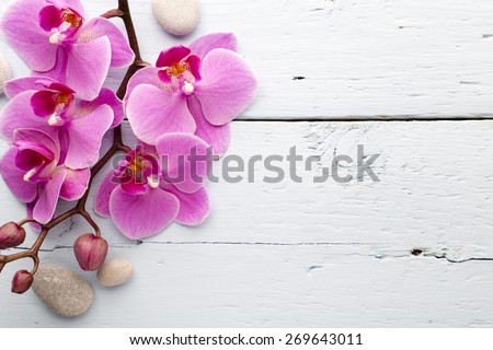 Pink orchid with buds. Greeting card. - stock photo