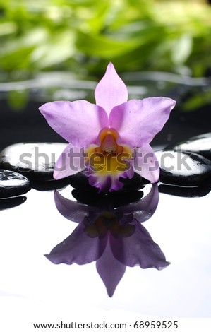 pink orchid with green leaf on pebble - stock photo