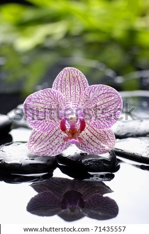 pink orchid with green leaf on pebble reflection - stock photo