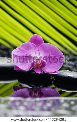 Pink orchid with pebbles and green leaf on wet background - stock photo