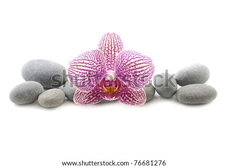 pink orchid with stones and bamboo grove on mat - stock photo