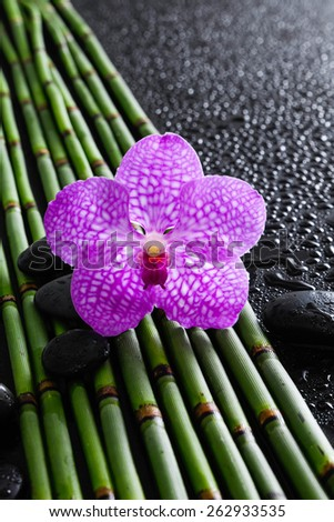 Pink orchid with stones on bamboo grove on wet background - stock photo
