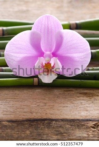 Pink orchid with thin bamboo grove on wooden background