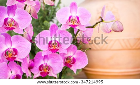 Pink orchid with vivid colors, outdoor setting and ceramic vase background - stock photo