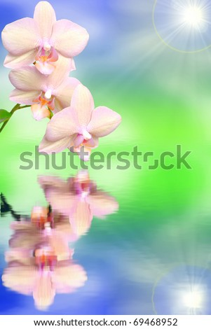 pink orchid with water reflection over spring background - stock photo