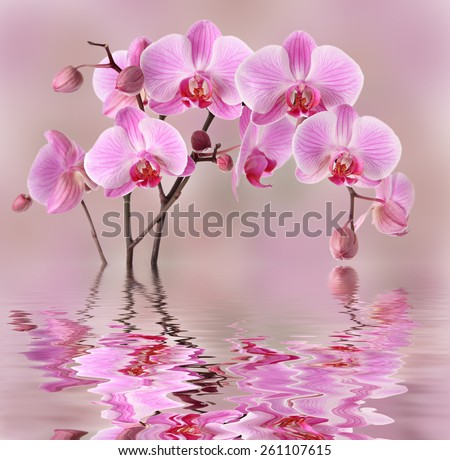 Pink orchids flowers background design - stock photo
