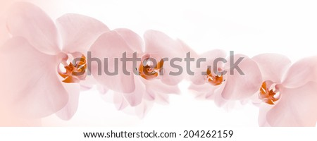Pink Orchids on white background - stock photo