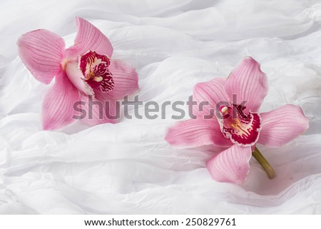 Pink orchids - white background - stock photo