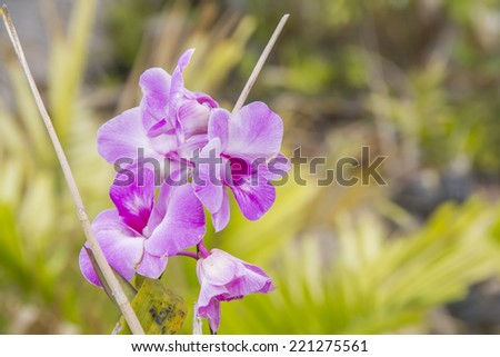 Pink orcid, Flower  - stock photo