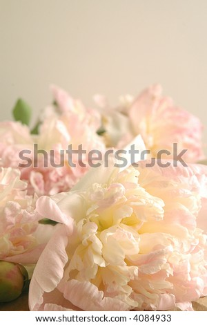 pink peonies on off-white background