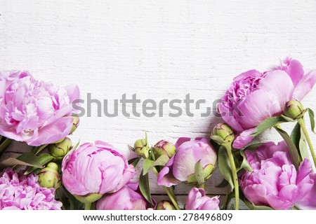 Pink peonies on white  wooden background - stock photo