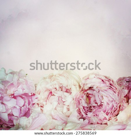 pink peony flowers for mom - stock photo