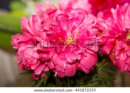 pink peony in bouquet - stock photo