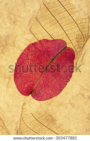 Pink Petal and Leaf Pressed On Recycled Paper Vertical Background - stock photo